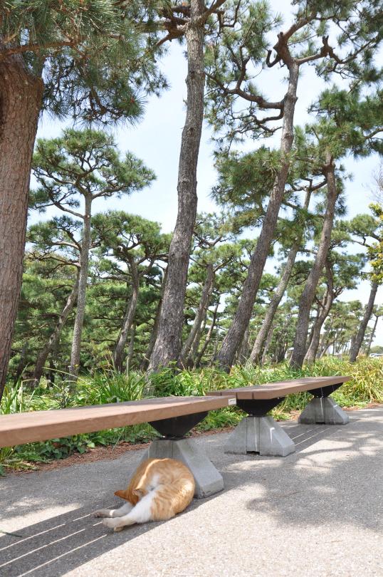 城ヶ島公園8