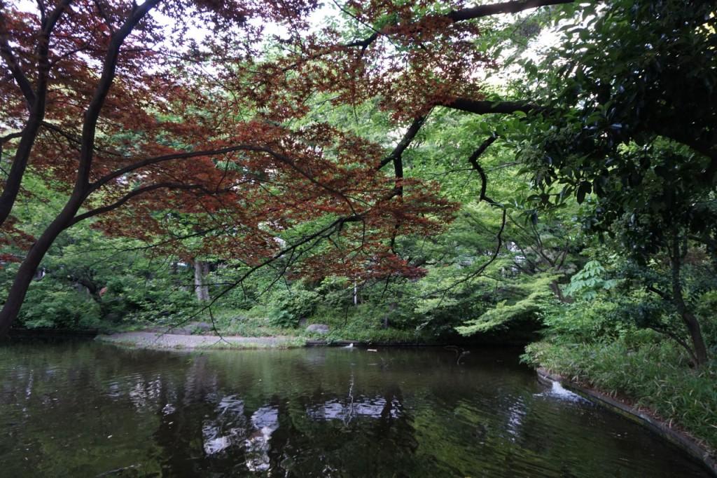 清水谷公園2