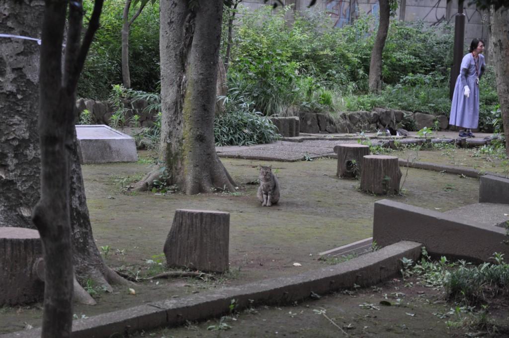 葛ヶ谷公園4