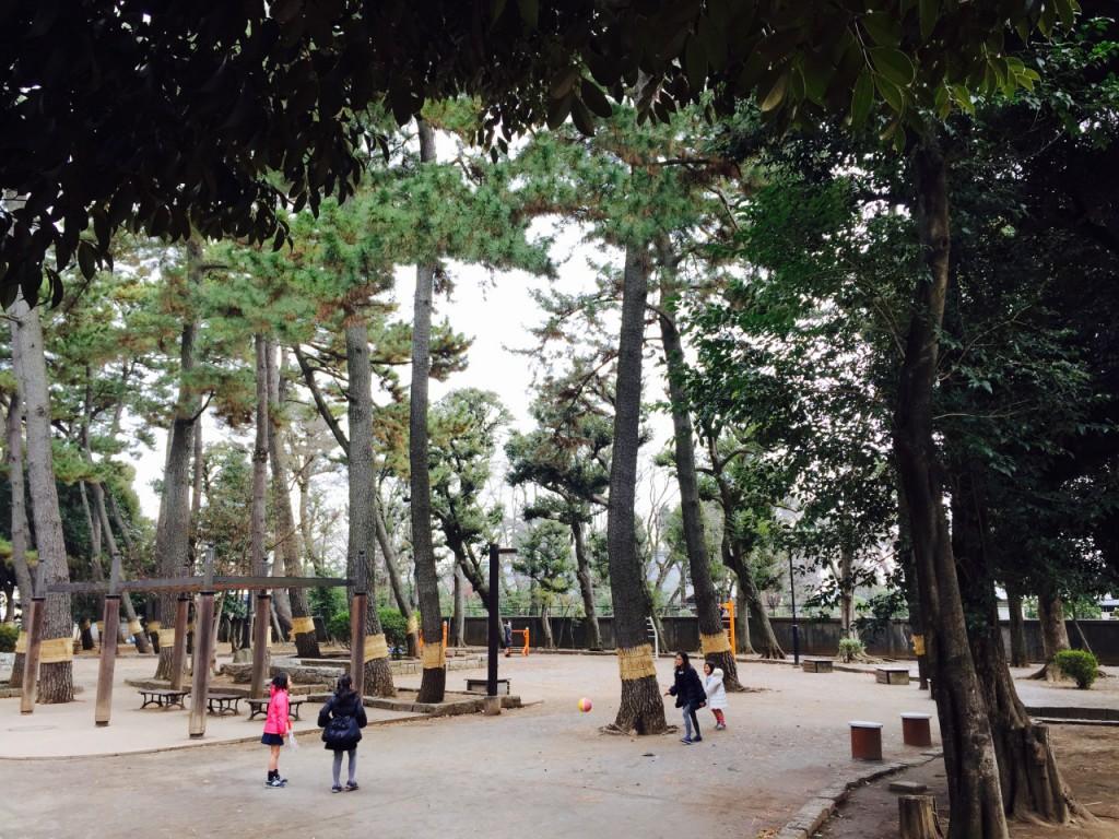若林公園4