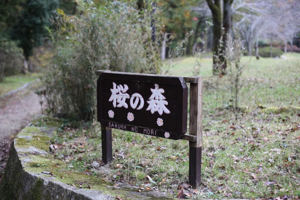宝が池公園6