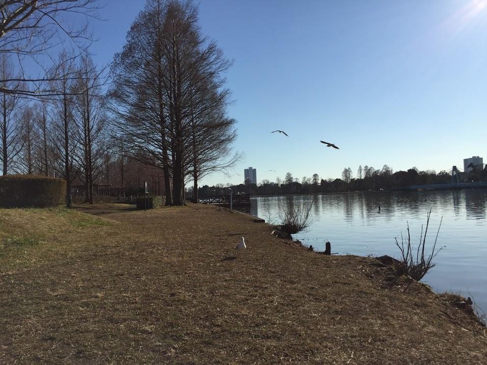 みさと公園13