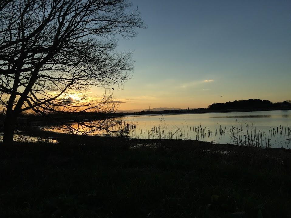 多々良沼公園9