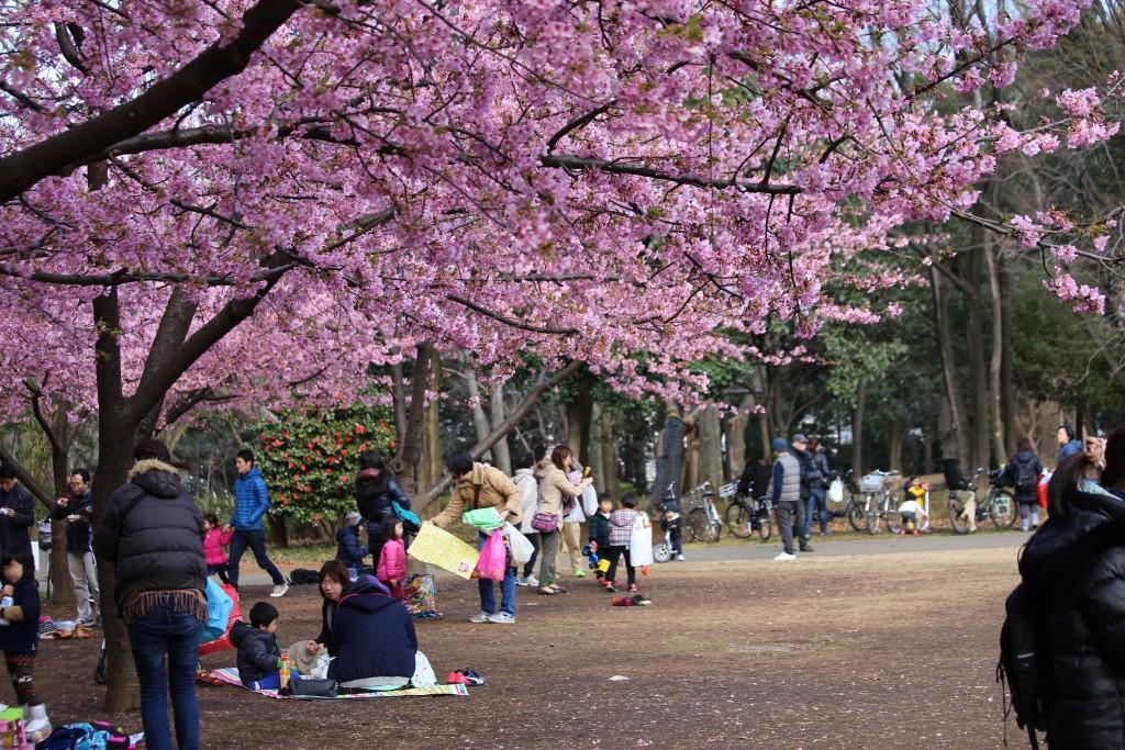 春を先取りした花見が楽しめる林試の森公園の広場