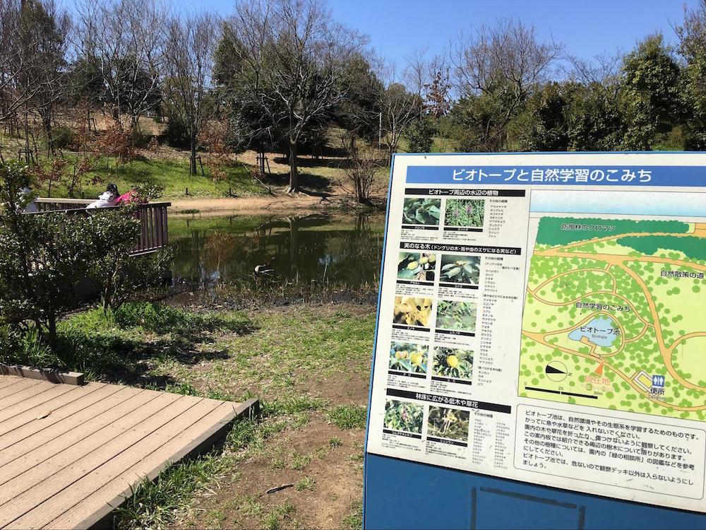 芦屋市総合公園4