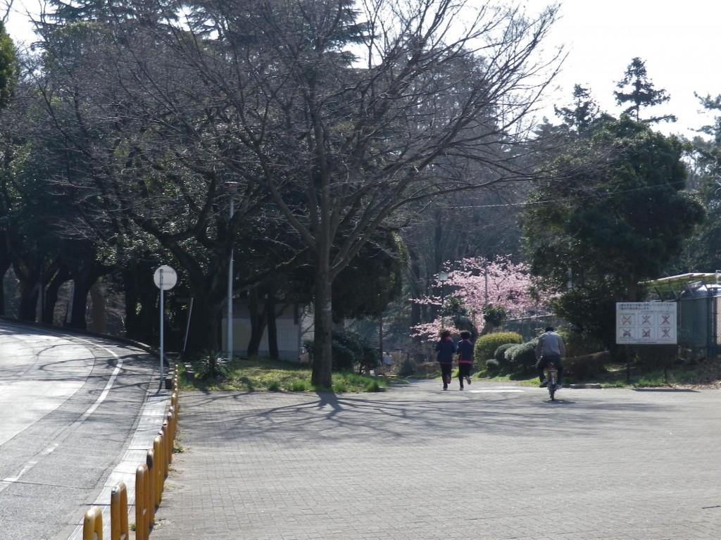 千葉公園10