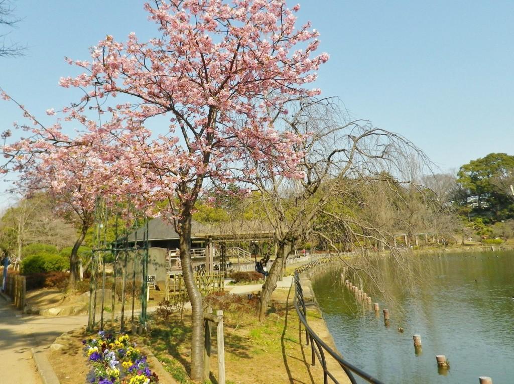 千葉公園13