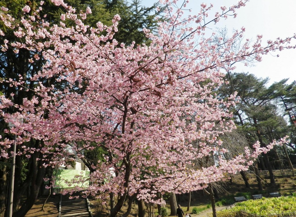 千葉公園14