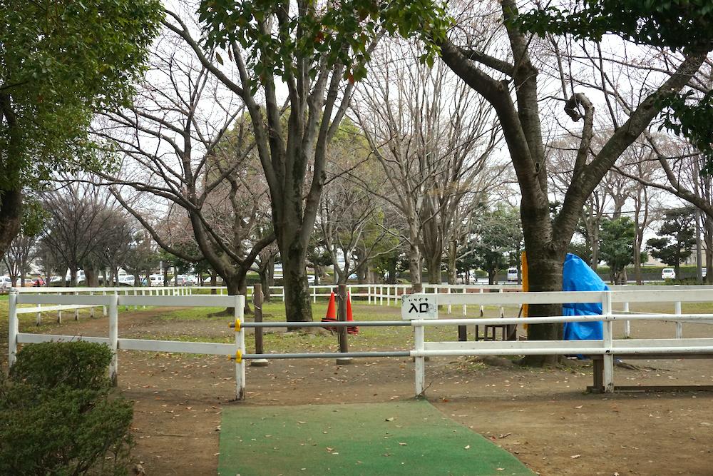海老名運動公園8