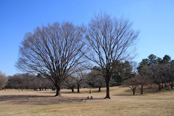 光が丘公園1