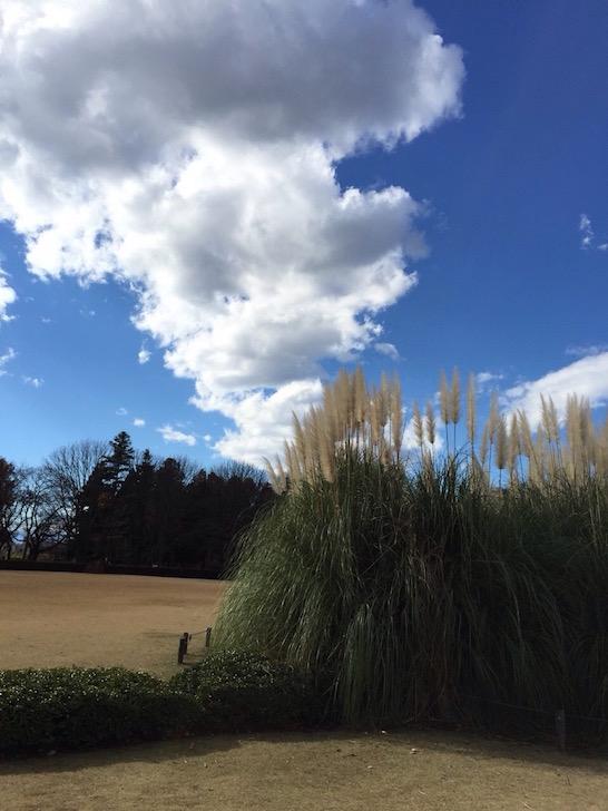 神代植物公園2