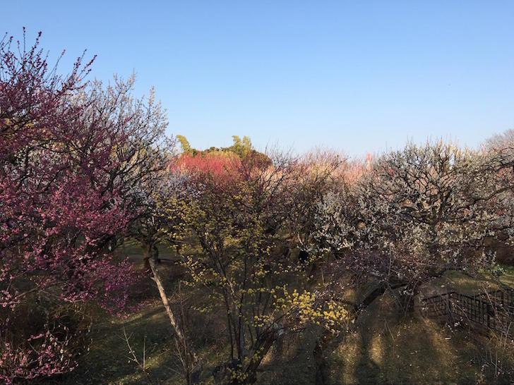 神代植物公園7