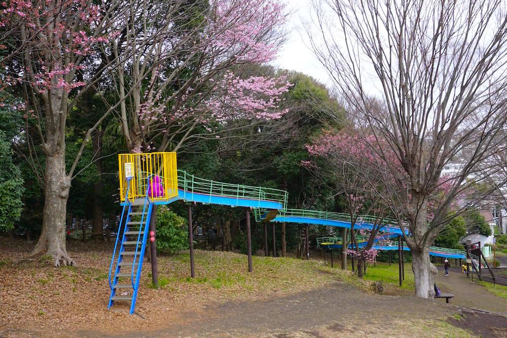 三ツ沢公園6