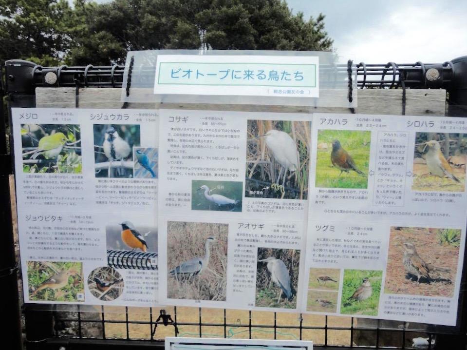 浦安市総合公園14
