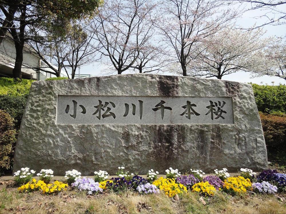 小松川千本桜1