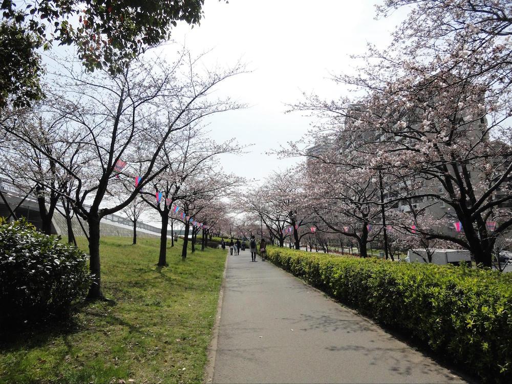 小松川千本桜2