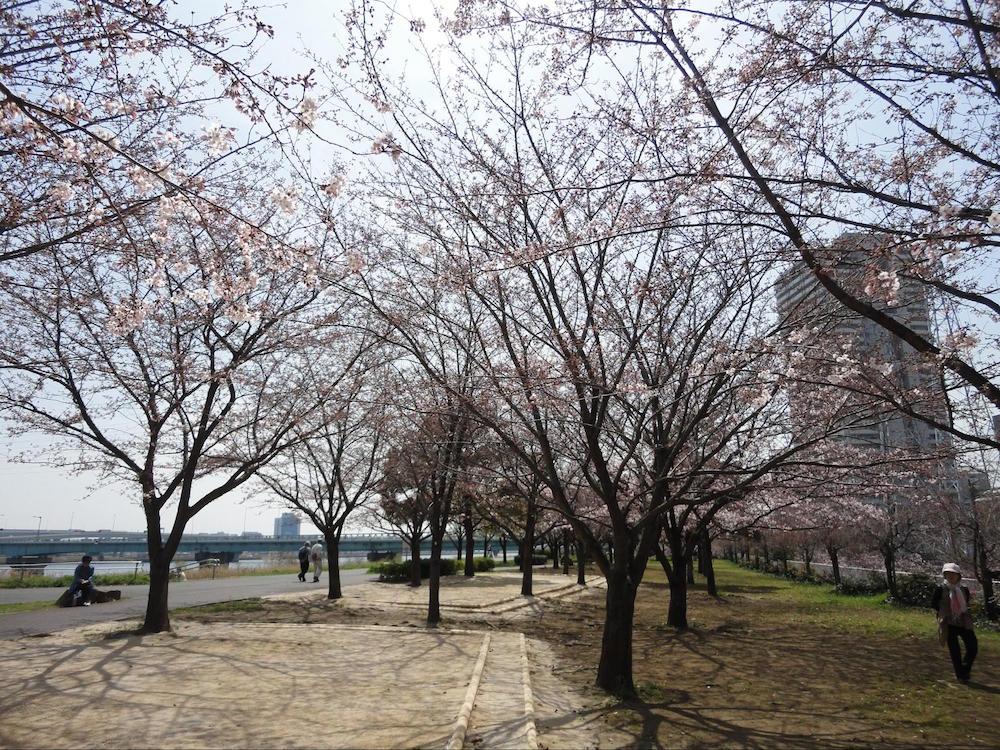 小松川千本桜3