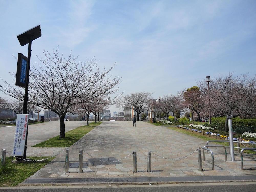 小松川千本桜6