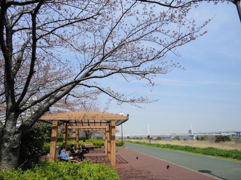 小松川千本桜7