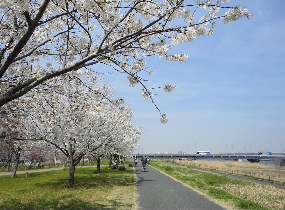 小松川千本桜9