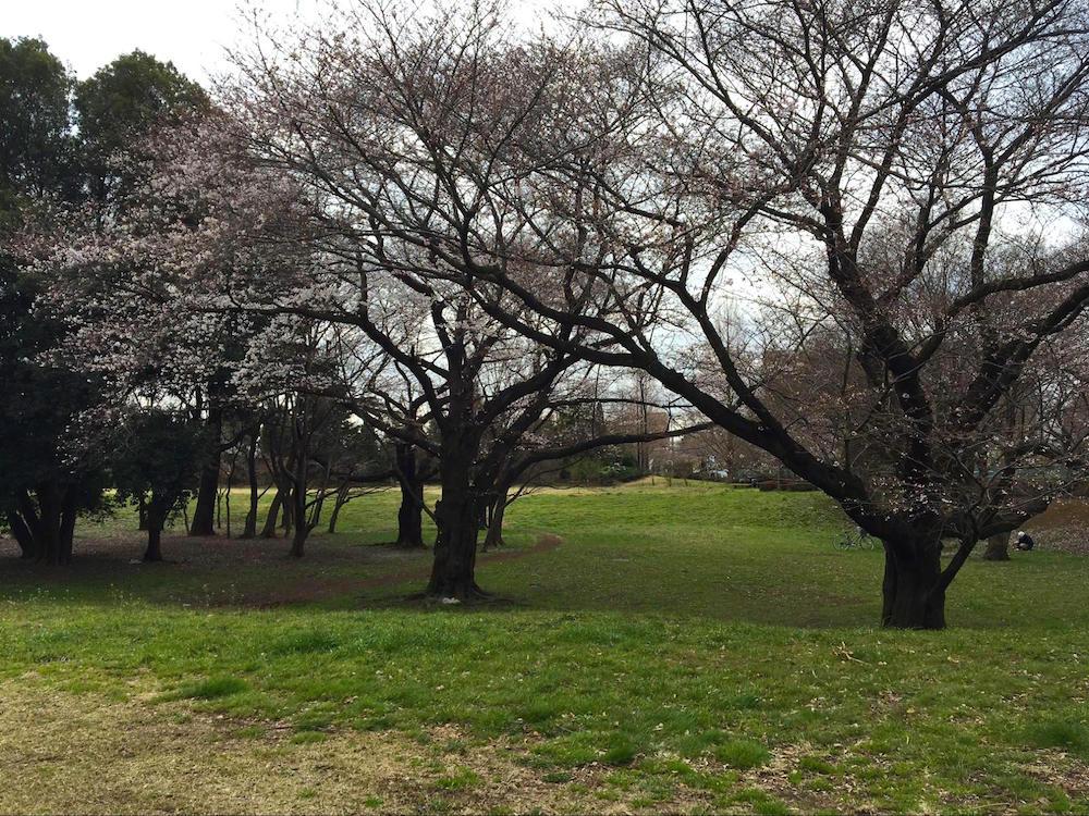 武蔵野の森公園9