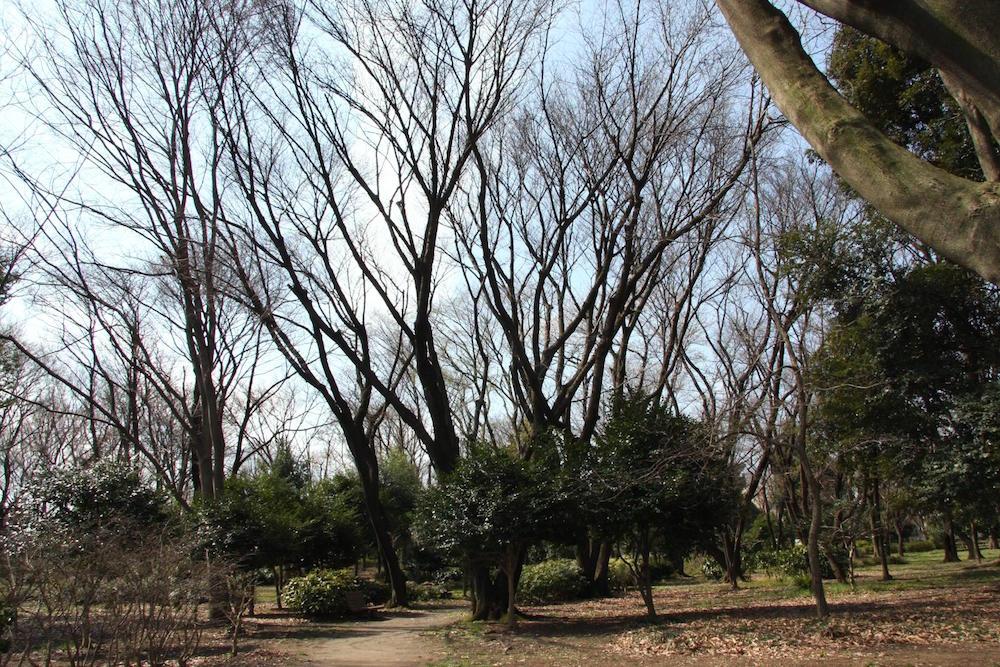 大泉中央公園11