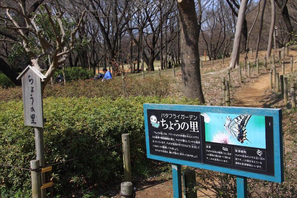 大泉中央公園12