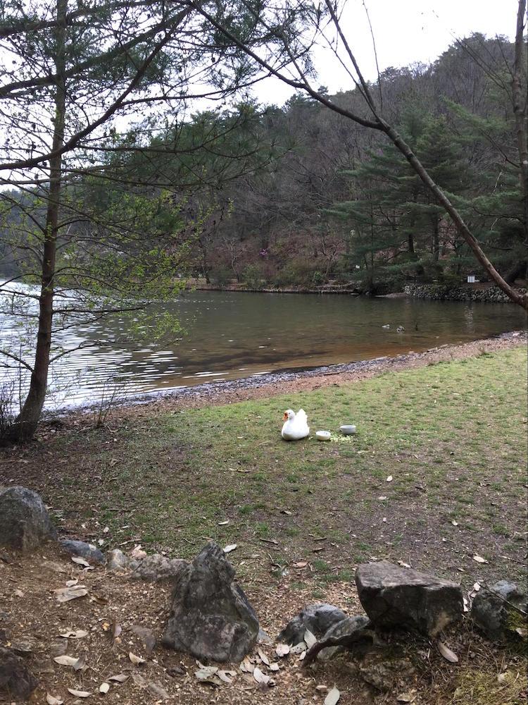 宝が池公園10