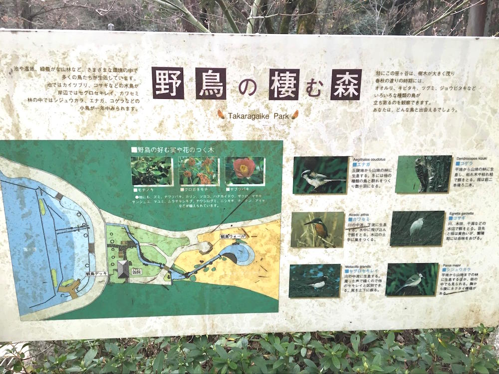 宝が池公園13