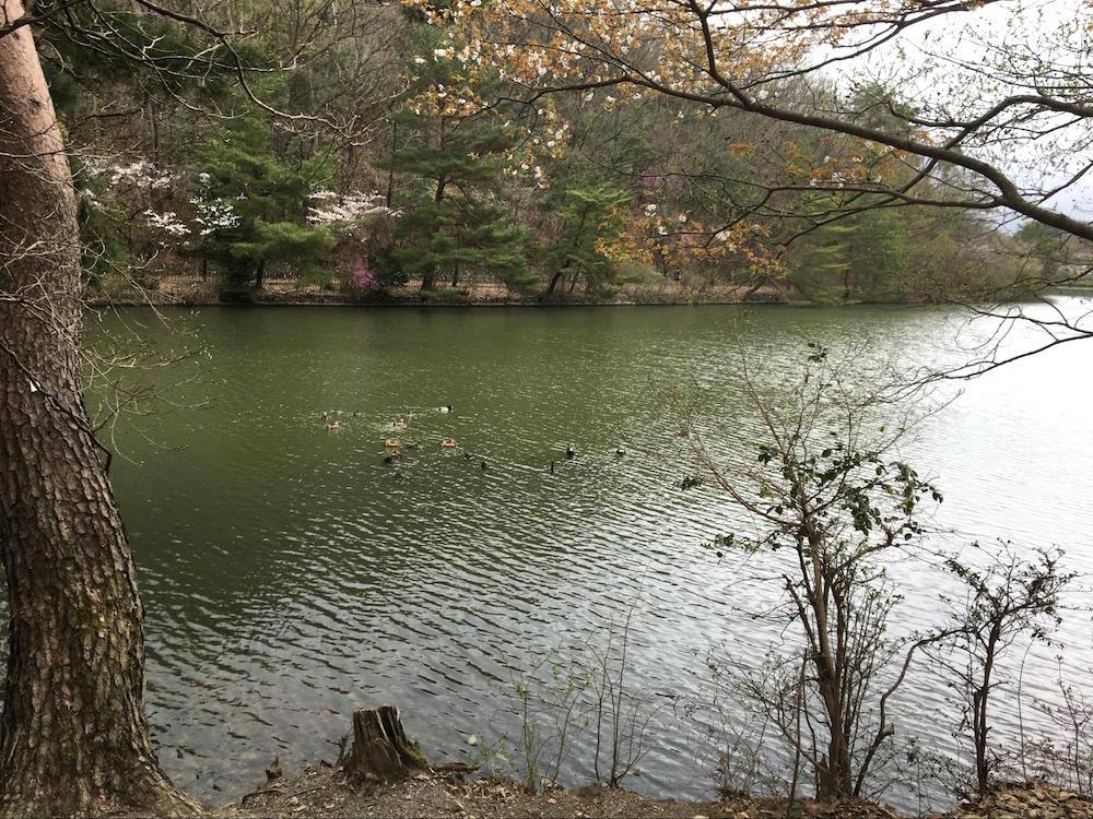 宝が池公園9