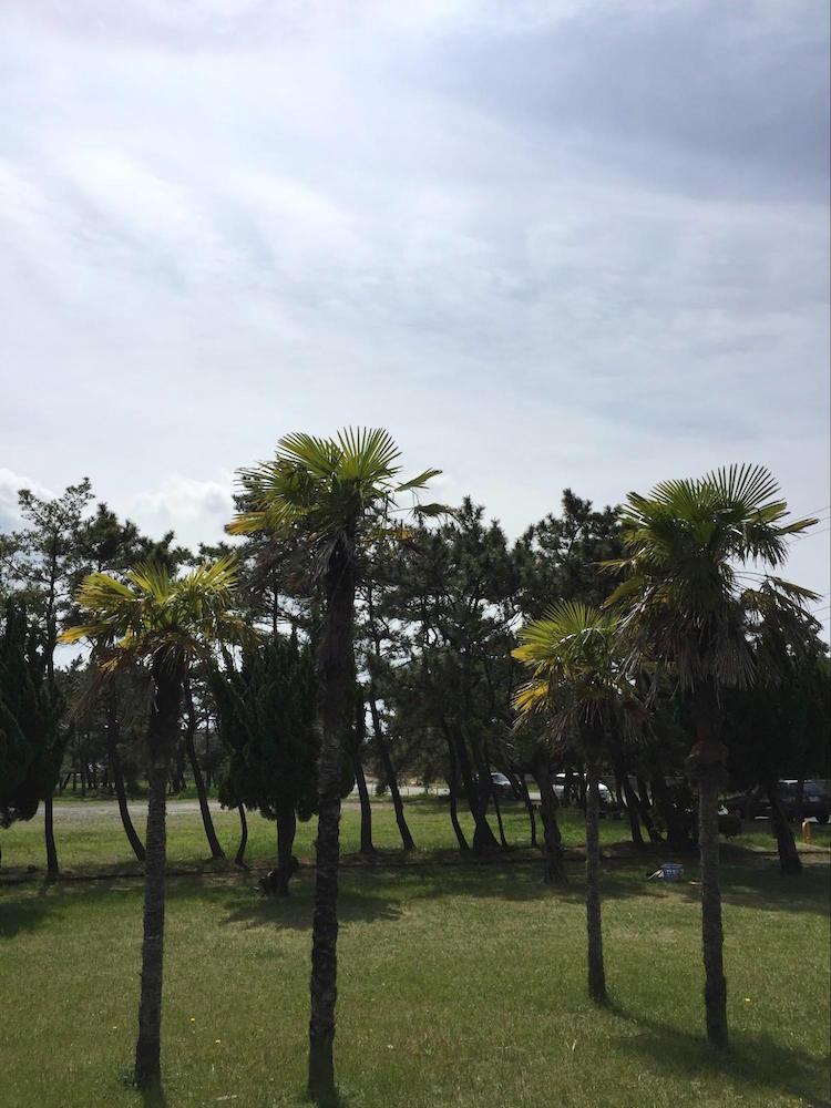 吾妻公園2