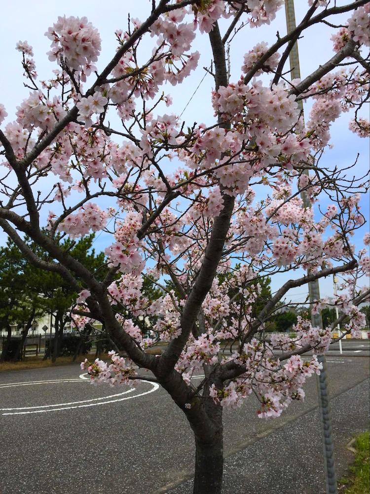 吾妻公園9