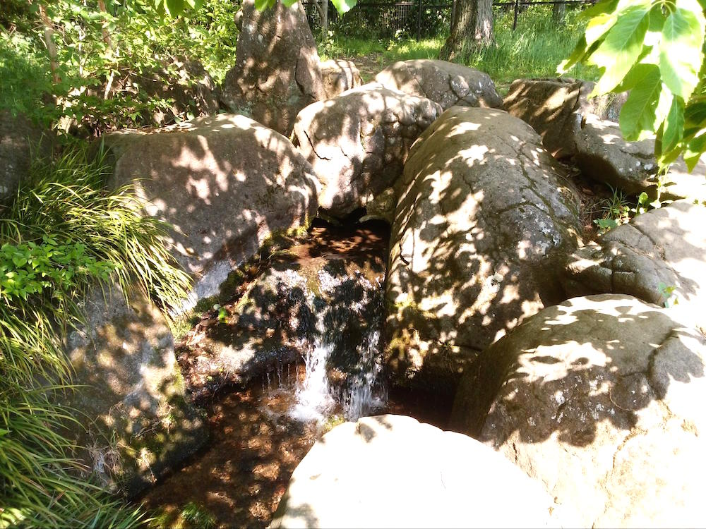 野川公園10