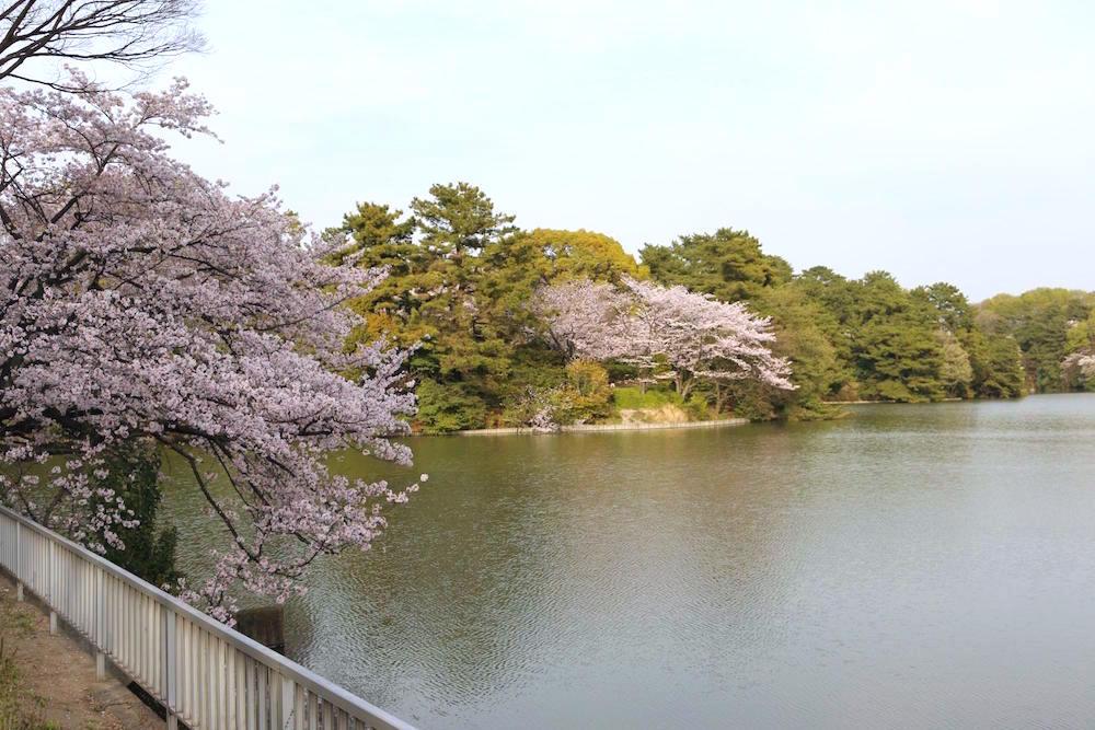 大池公園2