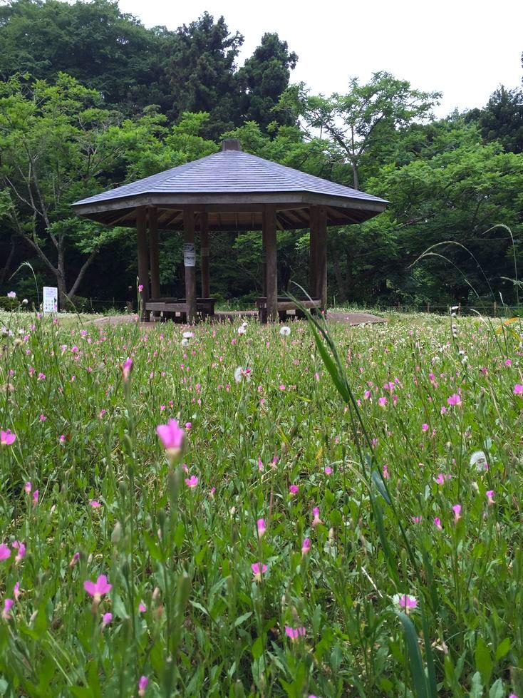 源氏山公園8
