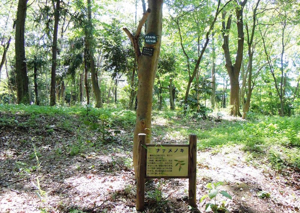 林試の森公園5
