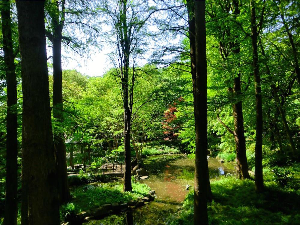 林試の森公園3
