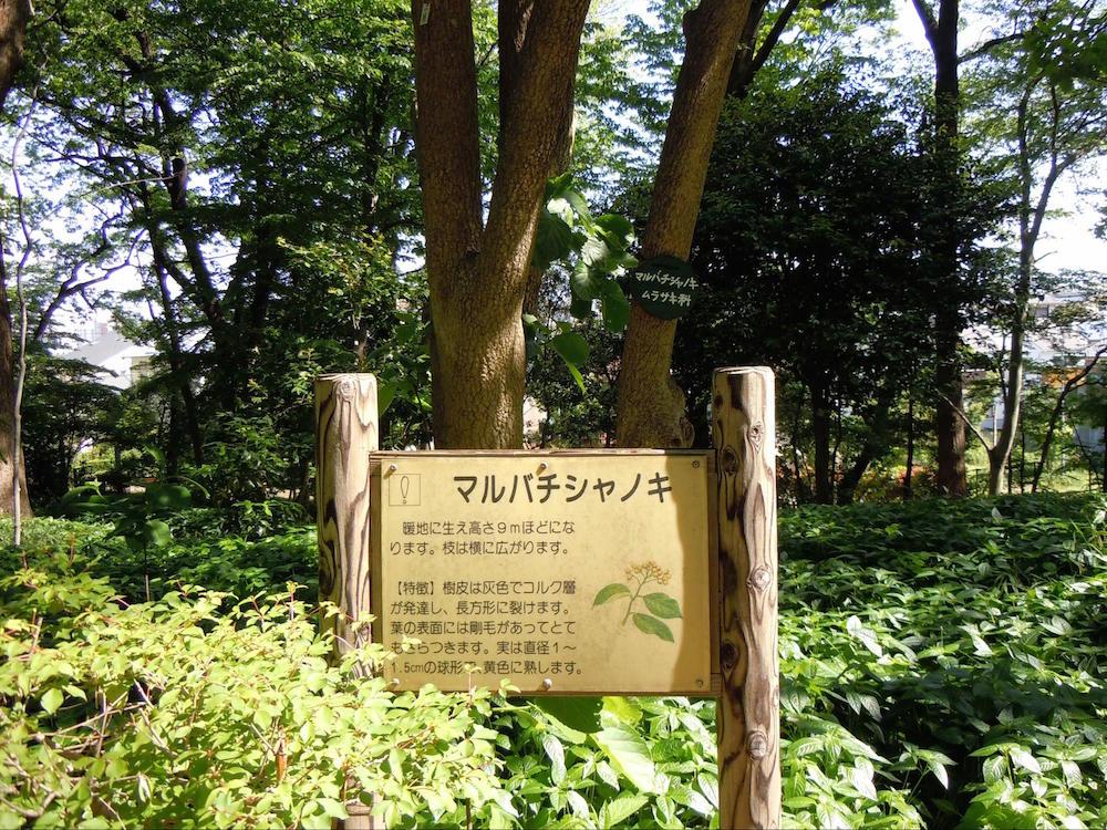 林試の森公園4