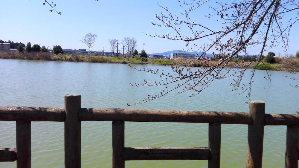 石垣池公園14