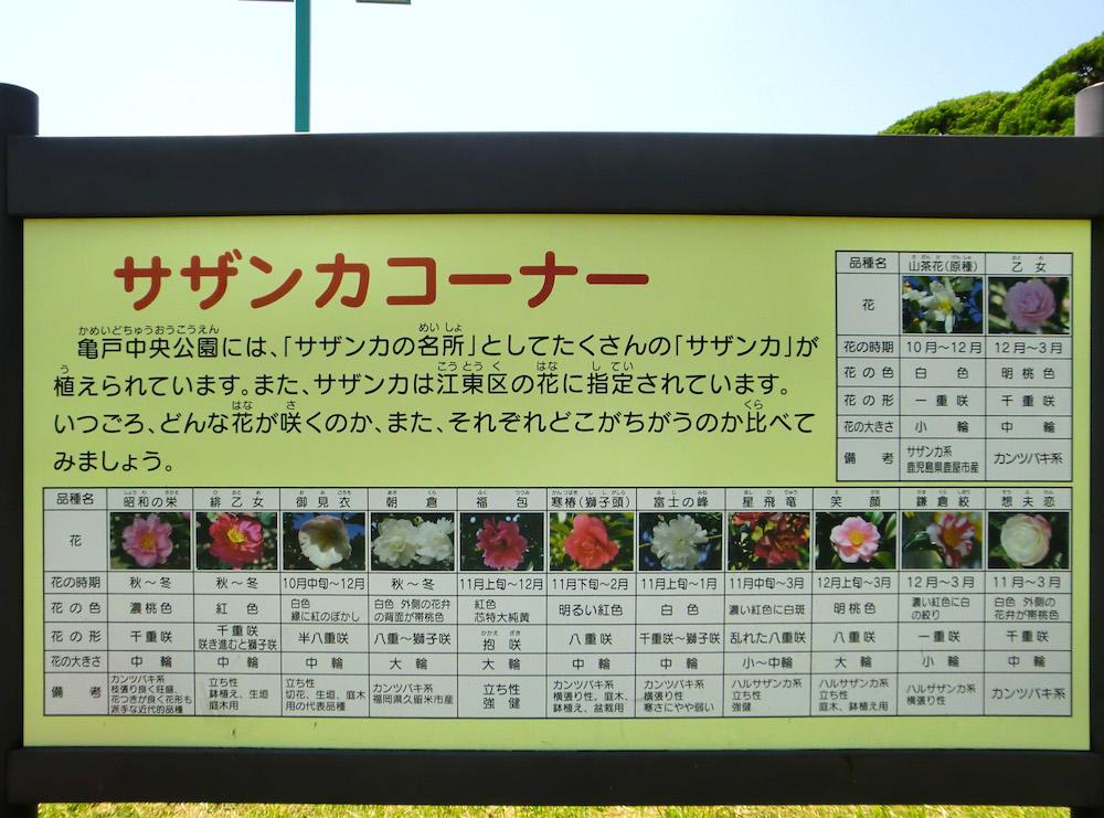 亀戸中央公園11