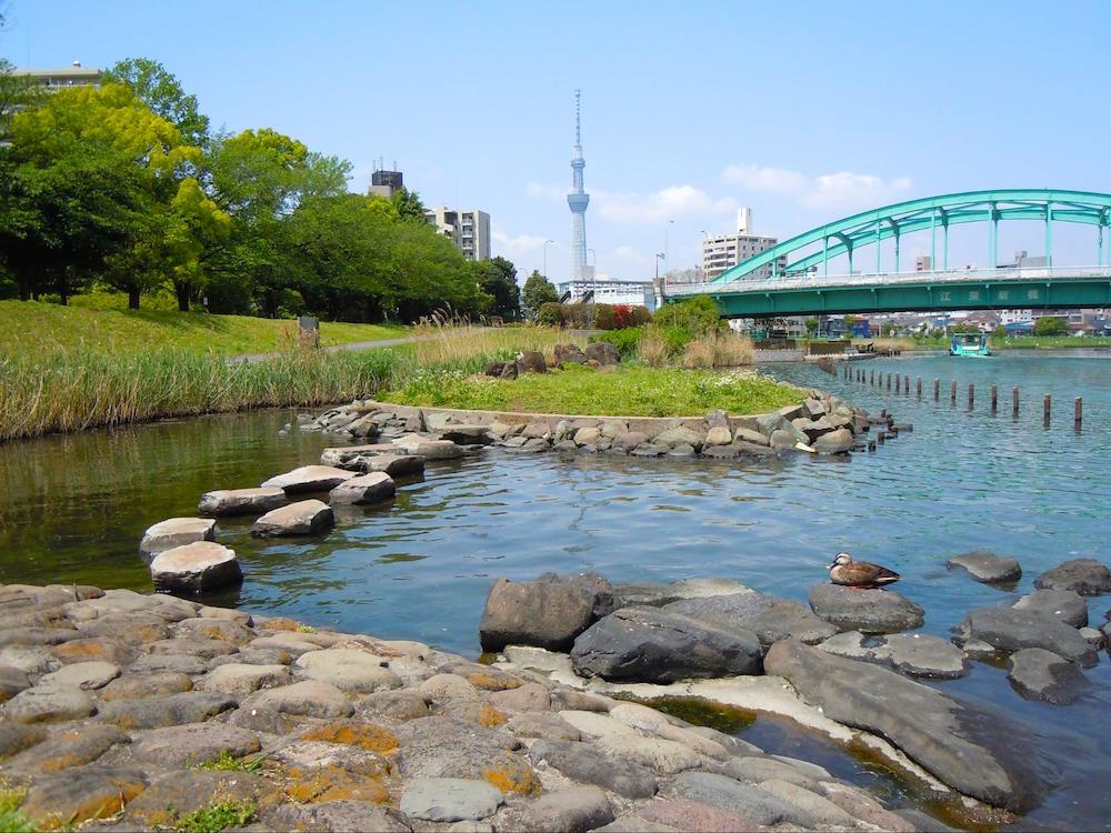 亀戸中央公園7