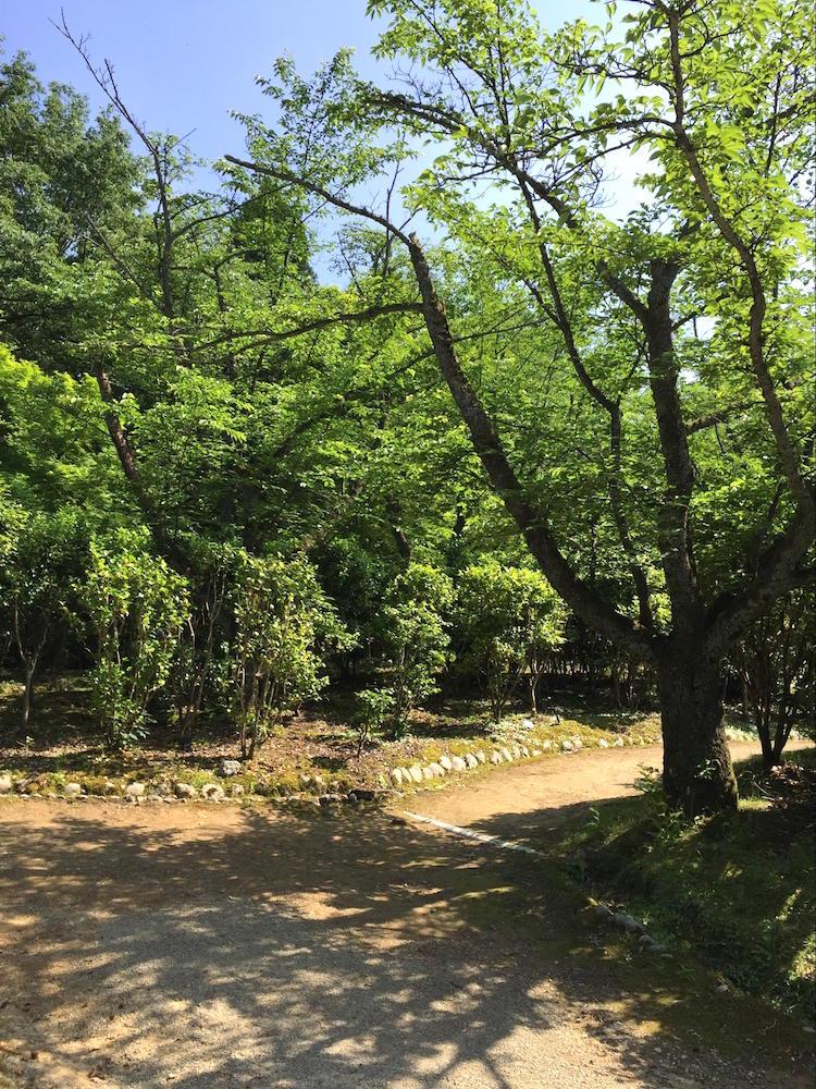 加茂山公園8
