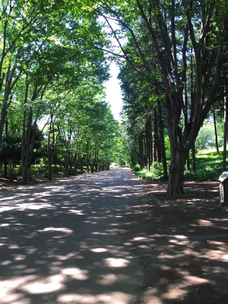 鶴間公園1