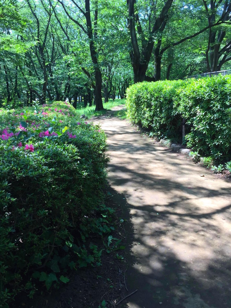 鶴間公園6