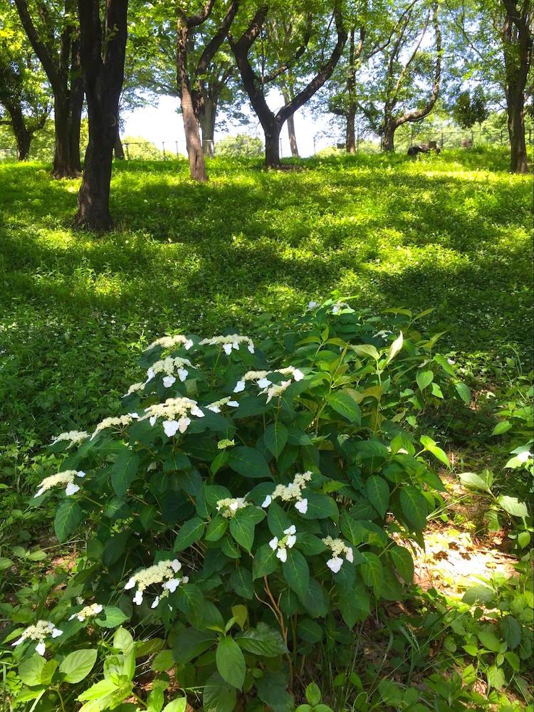 鶴間公園8