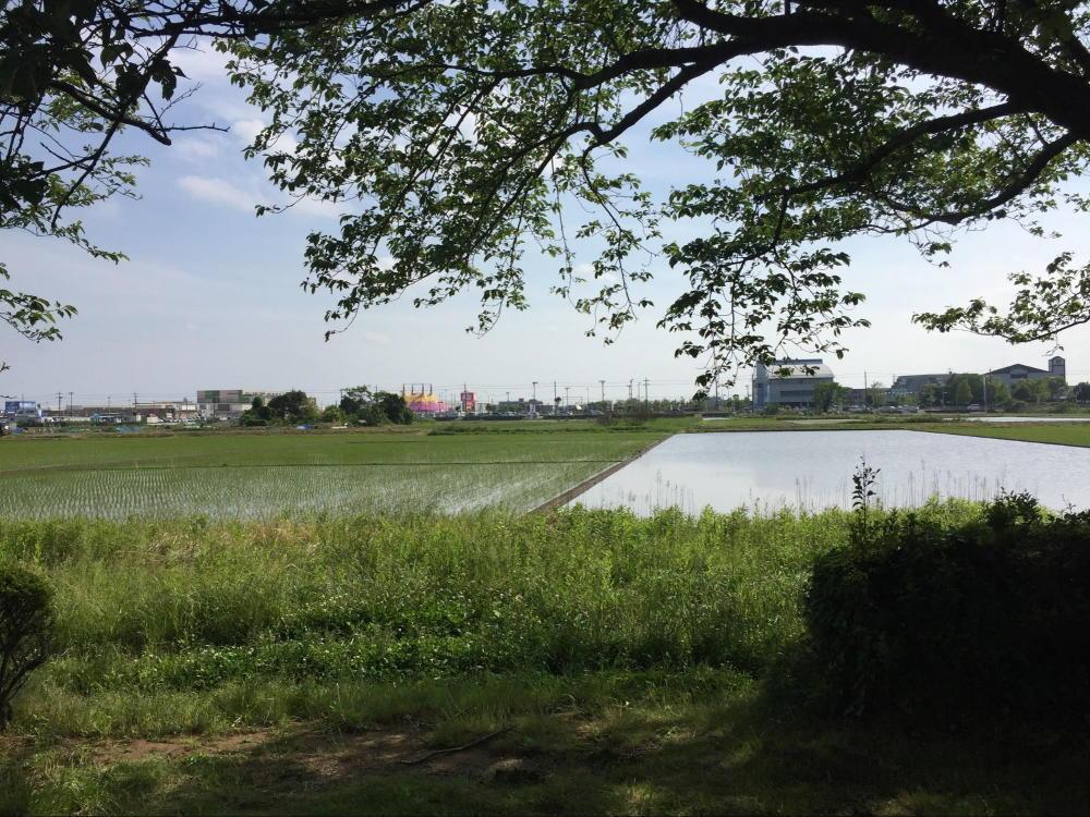 北五井緑道