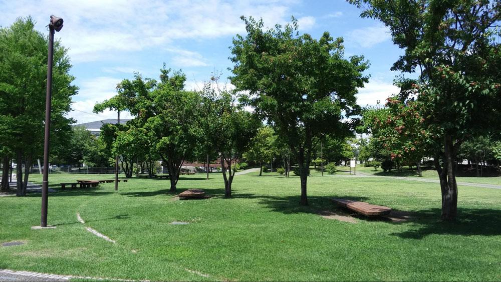 木陰に並ぶベンチ