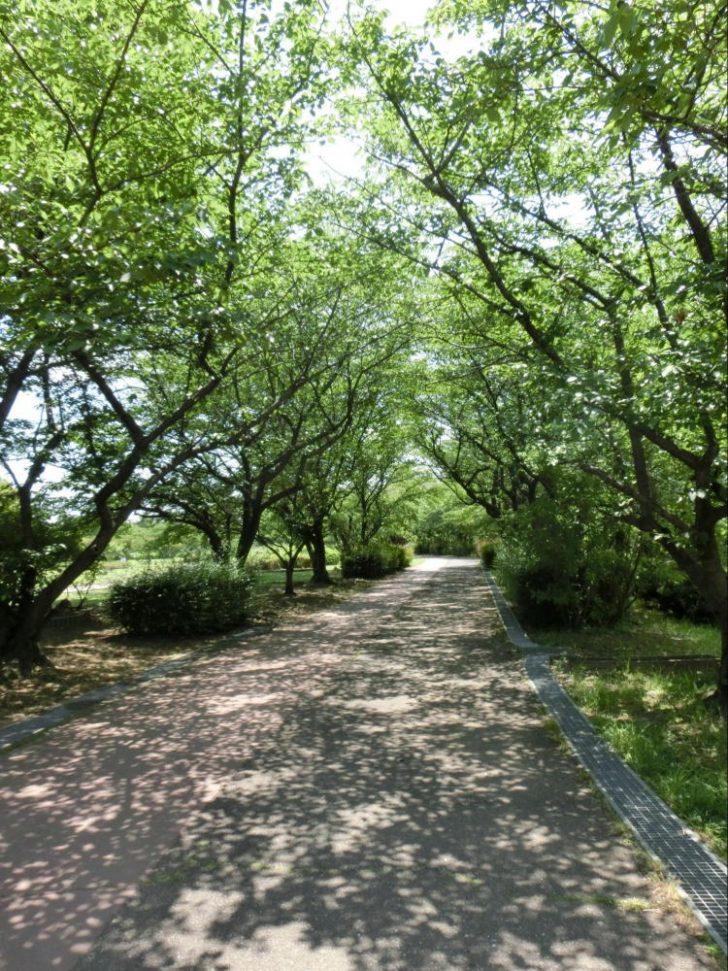 彩湖道満グリーンパーク公園