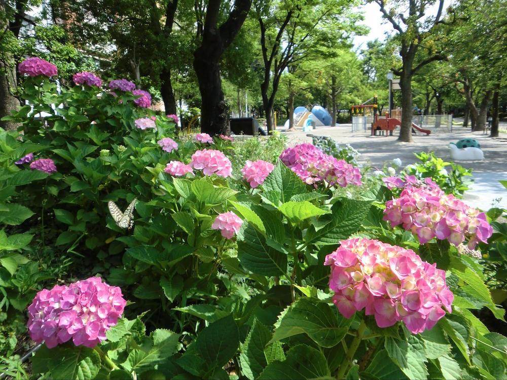 隅田公園5