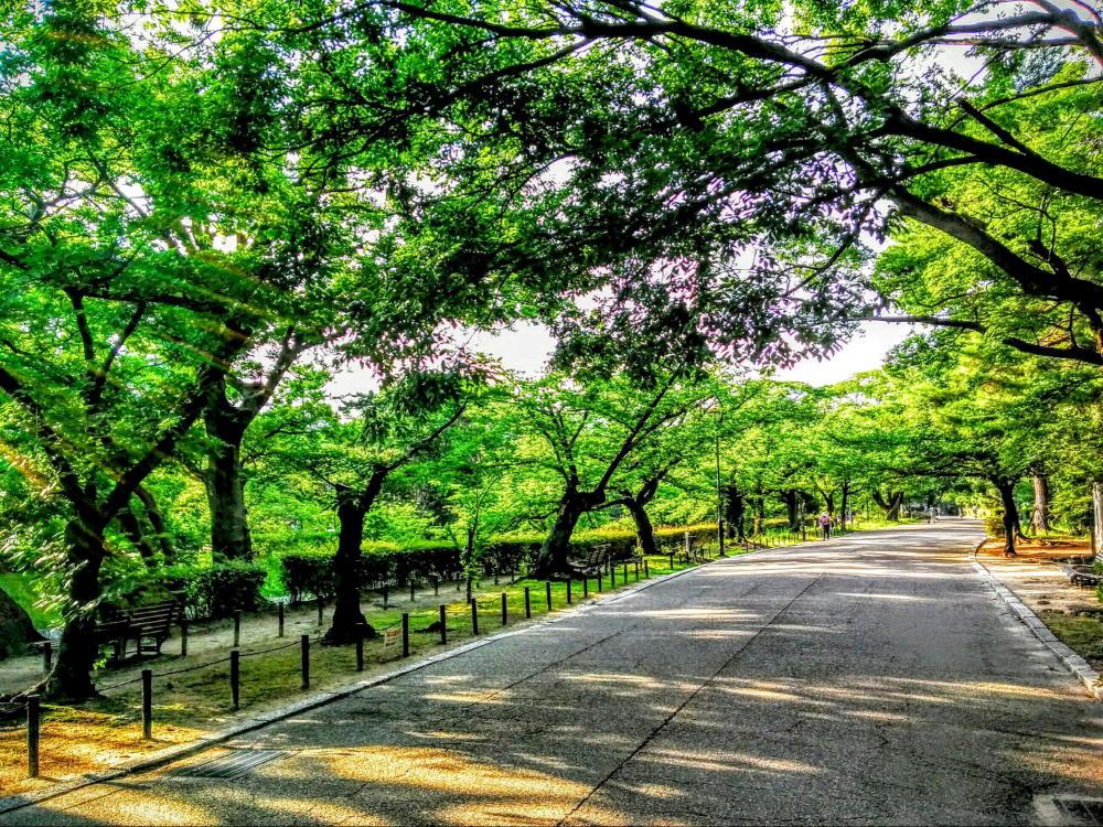 夙川河川敷緑地 夙川公園
